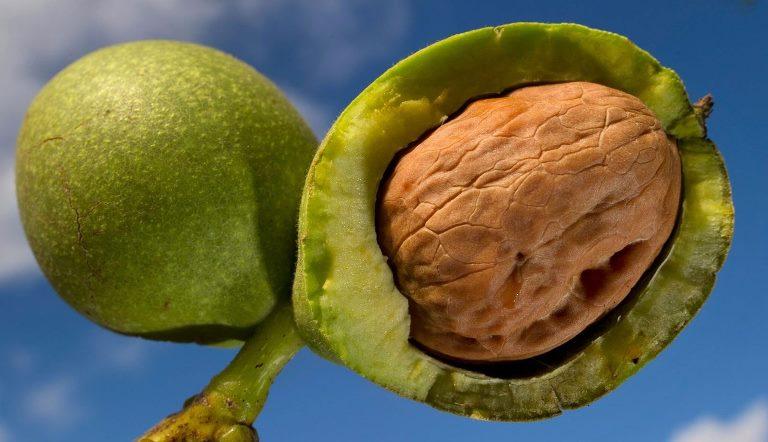 Чем полезна скорлупа и кожура грецкого ореха