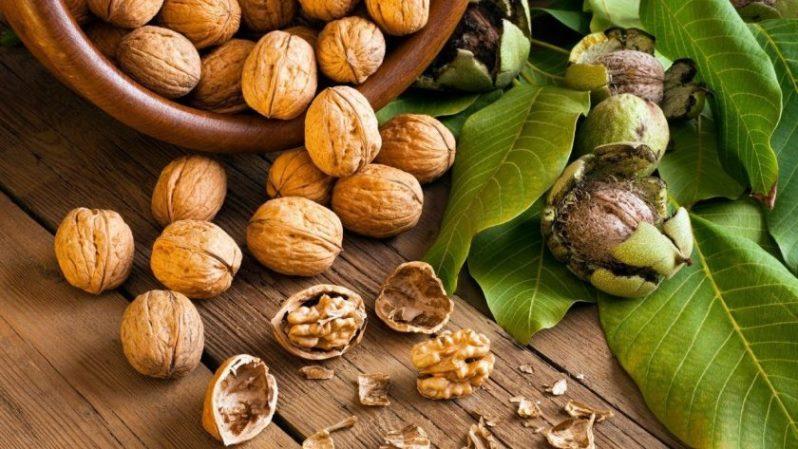 Какие части грецкого ореха несут пользу здоровью человека, как правильно употреблять
