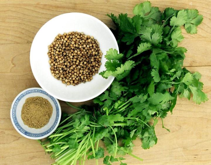 Кинза и кориандр - зеленая масса и семена одного растения
