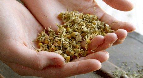 В какое время и как производить сбор семян